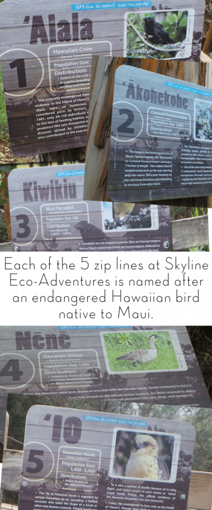 Maui Ziplines are named after endangered Hawaiian birds that are native to Maui