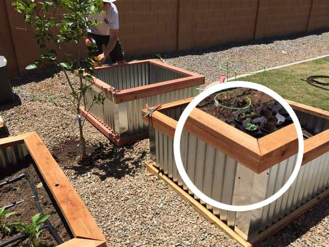 DIY Raised Bed Garden Boxes
