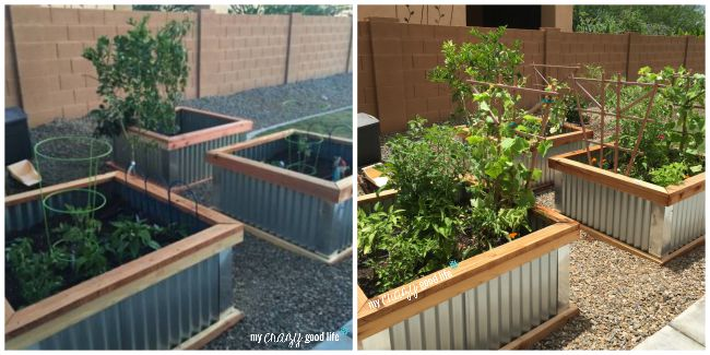before and after DIY garden boxes